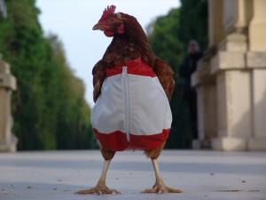 20070724-chicken3